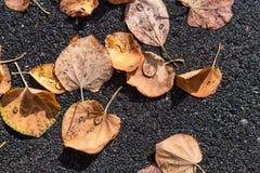 Las hojas secas caidas con lluvia caen en ellos Imagen de archivo