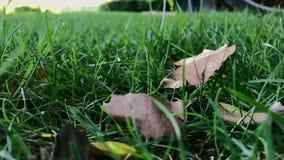 Las hojas secas se sacuden en hierba verde en día ventoso almacen de metraje de vídeo