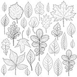 Las hojas siluetean vector determinado Página del libro de colorear para el adulto Foto de archivo