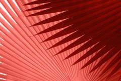 Las hojas tropicales texturizan en el color del año 2019 Pantone - coral de vida foto de archivo libre de regalías