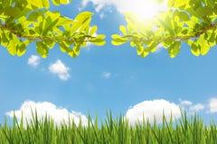 Las hojas ven con el cielo azul y la nube Fotos de archivo