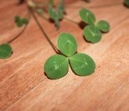 Las hojas verdes del trébol Imagen de archivo