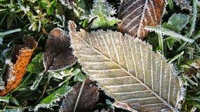 Las hojas y la helada Imagen de archivo