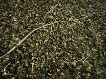 Las hojas y las ramitas marchitadas Fotografía de archivo