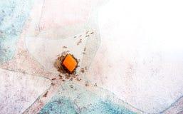 Las hormigas ayudan juntas a levantar pedazos de zanahoria de nuevo a su colmena, te imagen de archivo