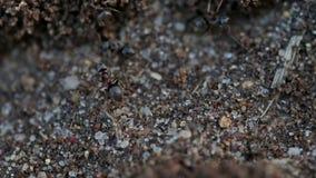 Las hormigas ayunan corriendo metrajes
