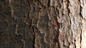 Las hormigas caminan en fila en la corteza de árboles por la mañana la hormiga es un pequeño insecto almacen de video