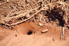 Las hormigas cerca cavaran y refugio de madera Imagenes de archivo