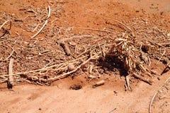 Las hormigas cerca cavaran y refugio de madera Imágenes de archivo libres de regalías