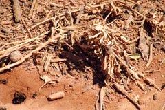 Las hormigas cerca cavaran y refugio de madera Imagen de archivo