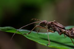 Las hormigas son ?tiles para la agricultura org?nica fotografía de archivo