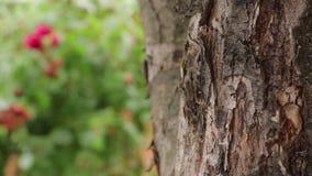 Las hormigas suben el árbol almacen de metraje de vídeo