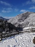 Las i granie zakrywający z śniegiem zdjęcia stock
