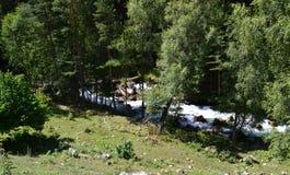 Las i halny strumień Zdjęcie Royalty Free