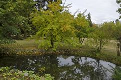 Las i jezioro z odbiciem w Krajowym zabytku krajobrazowa architektura Parkujemy muzealnego Vrana w poprzednim czasu pałac królews Obraz Royalty Free