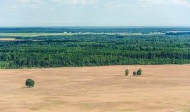Las i krajobraz obraz stock