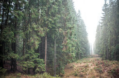 Las i mgła Obrazy Stock