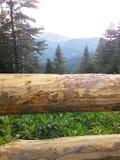 Las I Mountain View Zdjęcie Stock