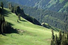 Las i obszar trawiasty Obraz Stock