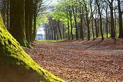 Las i rząd drzewo i liście obraz stock