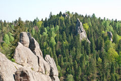 Las i skała Obrazy Royalty Free