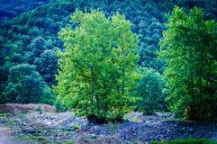 Las I las Turecka wieś Fotografia Stock