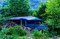 Las I las Turecka wieś Zdjęcie Stock