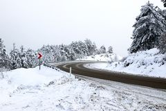 Las i zima Zdjęcia Stock