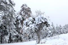 Las i zima Obrazy Royalty Free