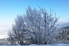 Las i zima Zdjęcie Royalty Free