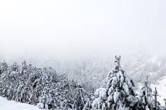Las i zima Obraz Royalty Free