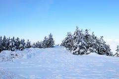 Las i zima Obrazy Stock