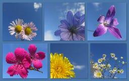 Las imágenes hermosas del flor florecen de campos de las montañas Foto de archivo libre de regalías