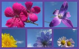 Las imágenes hermosas del flor florecen de campos de las montañas Foto de archivo