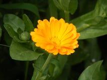 Las imágenes más hermosas de la flor para sus diseños especiales Imagen de archivo