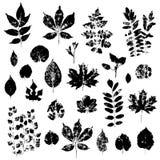 Las impresiones de las hojas fijaron aislado en el vector blanco del fondo Fotografía de archivo libre de regalías