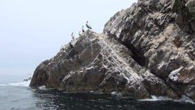 Las islas de Ballestas - Pisco - Perú almacen de metraje de vídeo