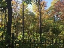 Las, jesień park Zdjęcie Royalty Free