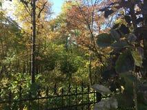 Las, jesień park Obraz Royalty Free