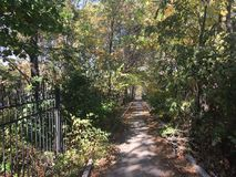 Las, jesień park Zdjęcia Royalty Free