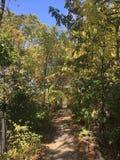 Las, jesień park Obrazy Stock