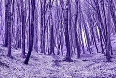 las jesieni zdjęcie stock