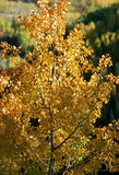 las jesieni Obraz Stock