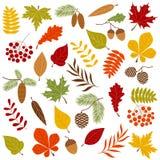 las jesieni ilustracja wektor
