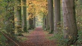 las jesieni zdjęcie wideo
