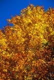 las jesieni Obrazy Royalty Free