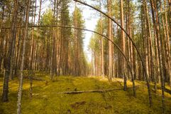 las jesieni Zdjęcia Royalty Free