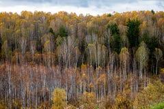 las jesieni Obraz Royalty Free