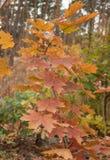 las jesieni fotografia royalty free