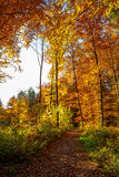 las jesieni Zdjęcia Stock